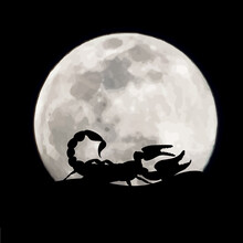 Vector Silhouette Of Scorpion On Moon Background. Symbol Of Night.