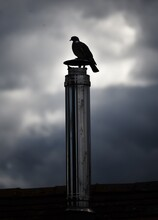 Silhouette Pigeon On A Chimney.