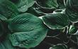 Zielone liście z kroplami deszczu