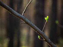 A Branch With Green Leaves Ope...
