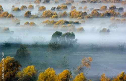Fototapety, obrazy: Trees in the morning haze in the valley. Autumn scene in Montenegro.