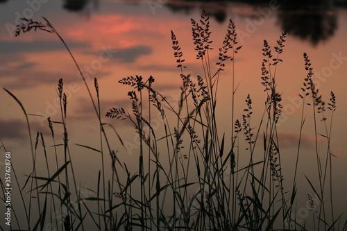 Trawa na tle tafli rzeki Odry - fototapety na wymiar