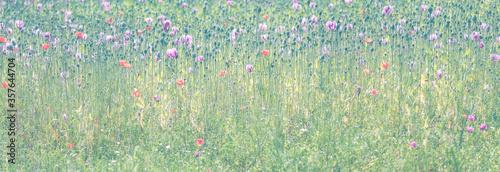 Valokuvatapetti Feld mit Mohn und Kornblumen Wiese Blumenwiese im Nebel