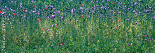 Photo Feld mit Mohn und Kornblumen Wiese Blumenwiese