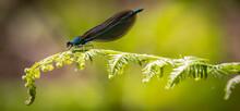 A Dragonfly Resting On A Fern