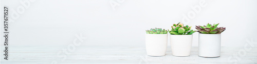 Bright green live textural house plants in trendy designer pots in the interior Fototapet