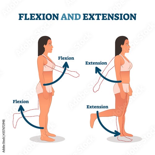 Foto Flexion and extension vector illustration