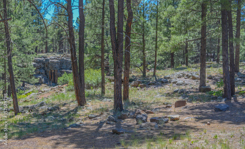 A trail near the San Francisco Peaks in the Arizona Pine Forest mountainous region. Near Flagstaff, Coconino County, Arizona United States.