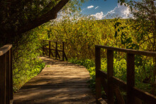 A Boardwalk Winds Through The Sunflowers Of Arivaca Wetlands. Southeast Arizona.