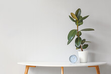 Green Houseplant With Clock On Table Against Light Background