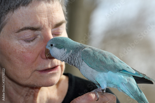 Cuadros en Lienzo Affectionate male Quaker Parrot pet with blue mutation kissing the face of a ret