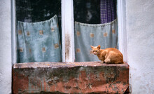 Street Cat Sits On The Window General Plan Color