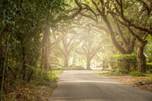 An Oak Tree Lined Road In The ...