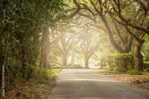 Photo An oak tree lined road in the south with light streaming in near sunset backgrou