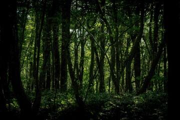 Landscape shot of a dense dark green forest