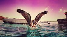 Pelican Curaçao Sunset