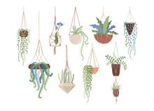 Houseplants In Hanging Pots Flat Vector Illustrations Set
