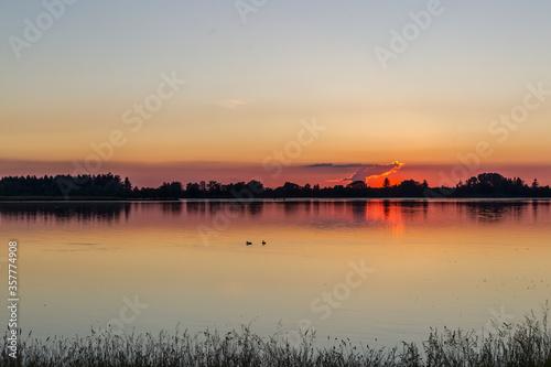 Carta da parati Ducks on the water at sunset on the lakeside