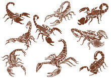Graphical Vintage Set Of   Scorpions ,vector  Illustration For Tattoo ,design And Printing