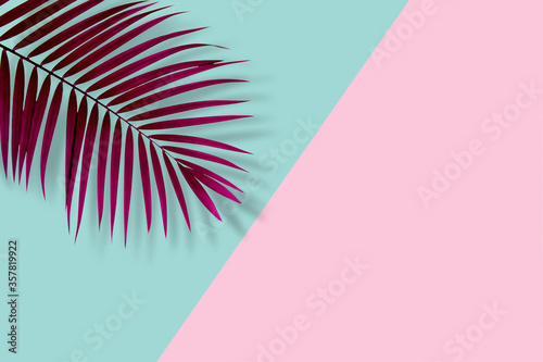top view of tropical palm leaf on blue and pink color background. minimal summer concept. flat lay