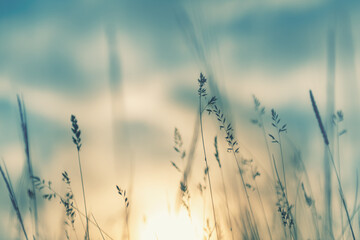 Wild grass in the forest at sunset. Macro image, shallow depth of field. Abstract summer nature background. Vintage filter
