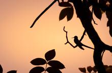 Silhueta De Pássaro Ao Por Do...