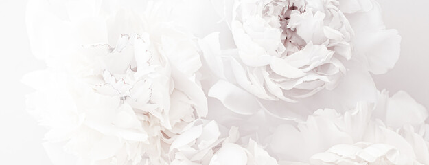 Pure white peony flowers as floral art background, wedding decor and luxury branding