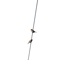 Two Sparrows Perched On An Overhead Wire