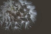 Seeds Dandelion Mirror Reflect...