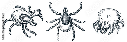 Bloodsucking ixodes ticks and dust mite bug icons, isolated on white background Wallpaper Mural