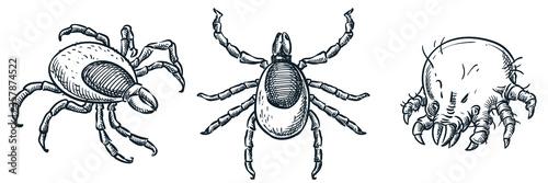 Fototapeta Bloodsucking ixodes ticks and dust mite bug icons, isolated on white background