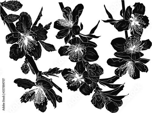 Obraz silhouette of blossom sakura three small branches - fototapety do salonu