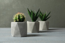 Artificial Plants In Ceramic F...