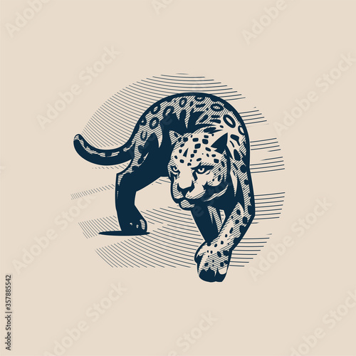 Panther or cougar, wild cat moves Fototapet