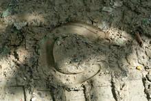 Horseshoe Foot On Mud