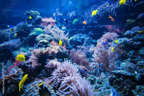 Fotografia Tropical Fish on a coral reef