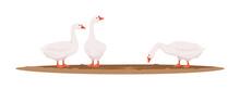 Feeding Geese Semi Flat RGB Co...
