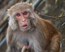 Close Up Of A Young Baboon Monkey
