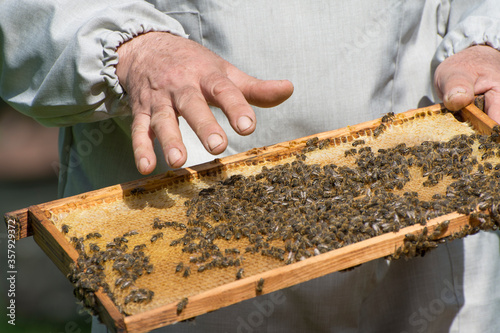 Photo A beekeeper inspects a honeycomb