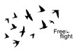 The silhouette of flying swallows. Vector illustration