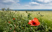 Near Normanby, Lincolnshire, U...