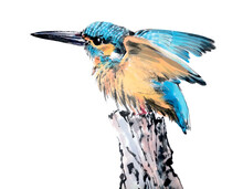 Watercolor Of Beautiful Kingfisher, Isolated Object On White Background. Hand Drawn Stock Illustration Of Traditional Chinese Ink And Wash Painting Isolated On White Background.