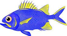 Funny Sea Bass Blue Vector