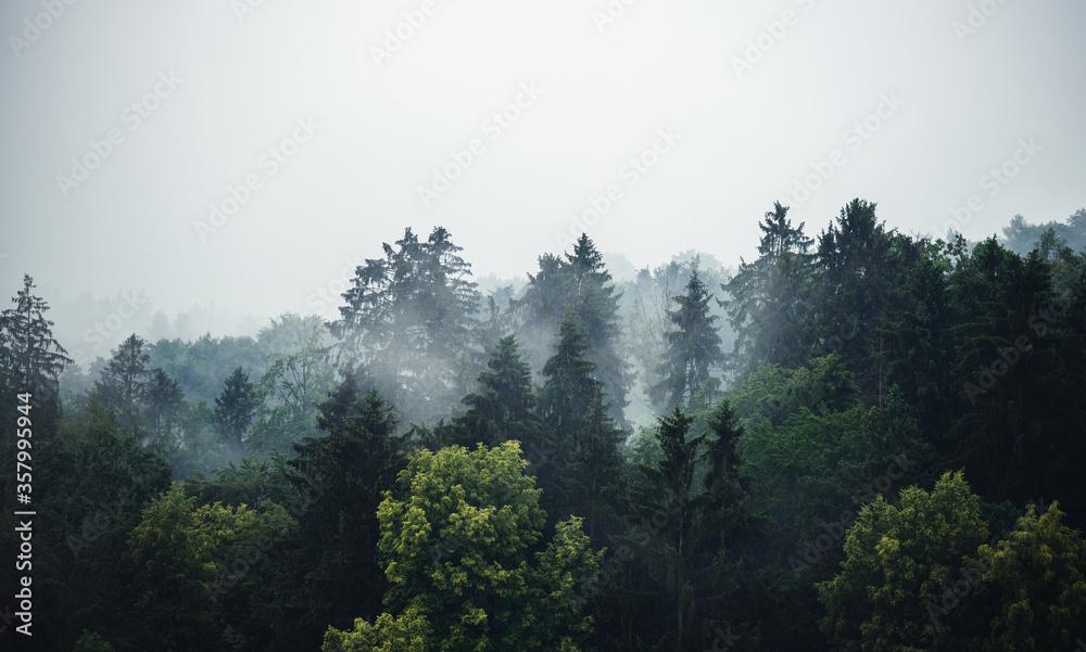 Fototapeta Mischwald im Nebel - Banner mit viel Textfreiraum