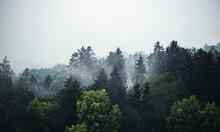 Mischwald Im Nebel - Banner Mi...