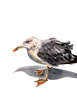 Watercolor Illustration Of Seagull Bird Standing On Her Feet With Grey Shadow. Cute Bird On A Seaside