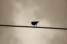 Low Angle Shot Of A Bird Silho...