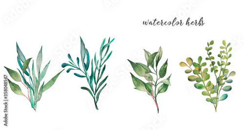 Tela watercolor set of blades of grass