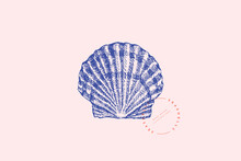 Realistic Hand-drawn Scallop Shell. Ancient Saltwater Clam, Conch Engraved Line. Fauna Of The Sea And Ocean In Retro Style. Design Element For Menu, Invitation, Poster, Postcard.