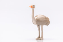 Close Up Of An Ostrich Head Ma...